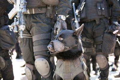 SWAT K-9
